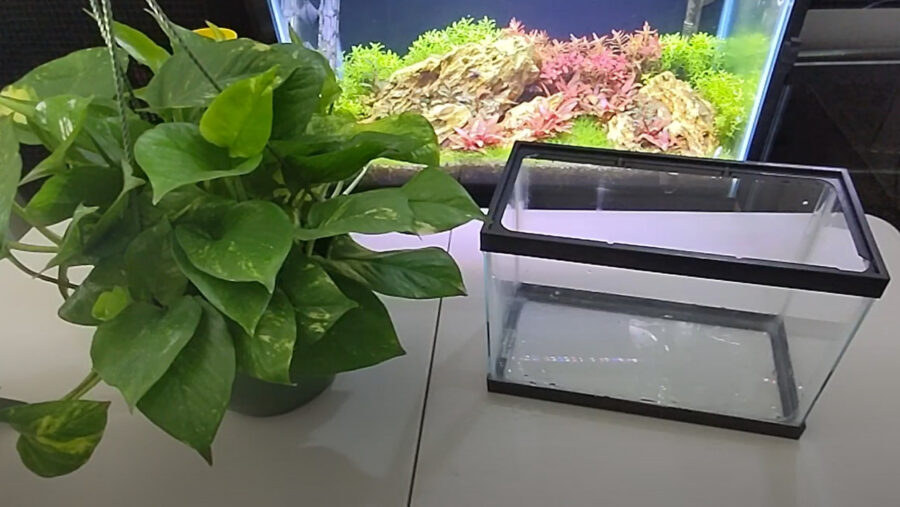 How Much Nitrate Does Pothos Remove