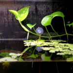 Tips To Grow A Healthy Pothos Fully Submerged